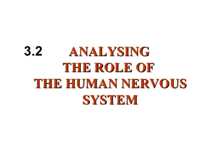 the roles of the nervous system biology essay The nervous system and endocrine system allow information to be communicated throughout the body discover how the nervous system works.