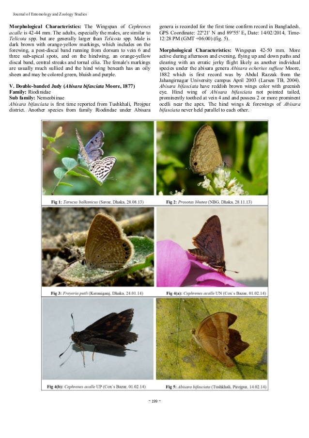 Five New Records of Butterfly Species from Dhaka, Slide 3