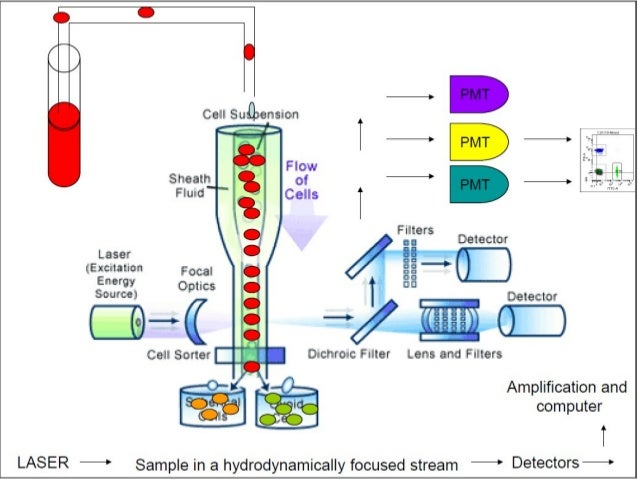Flow Cytometry Basics Principles And Applications