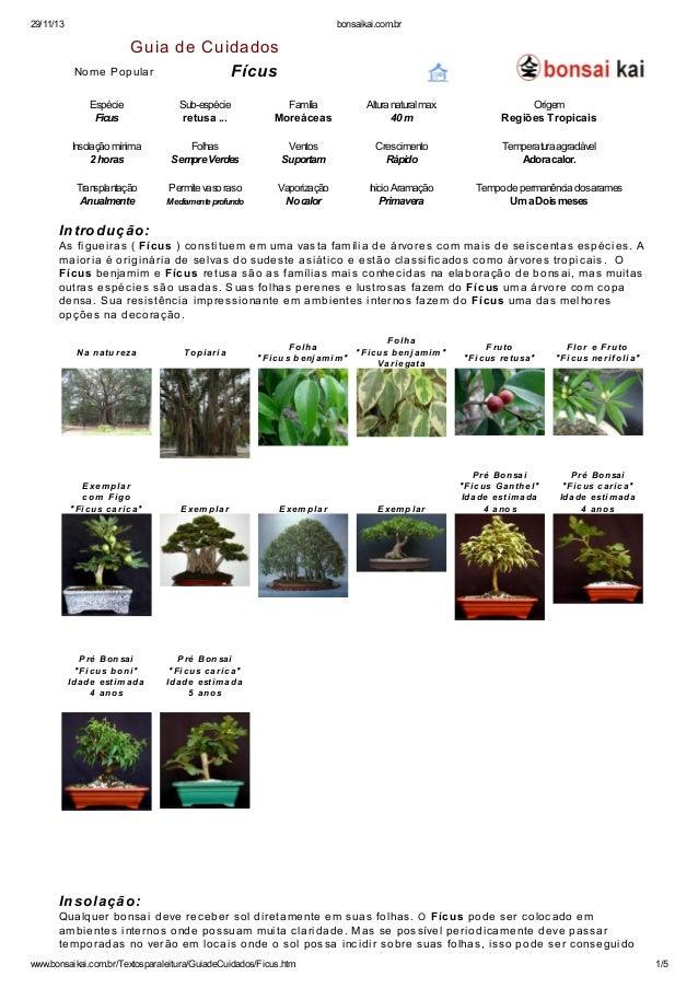29/11/13 bonsaikai.com.br  Guia de Cuidados  No me Pop ula r Fícus  Espécie Sub-espécie Família Altura natural max. Origem...
