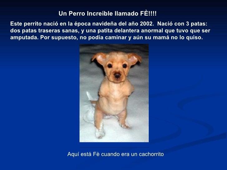 Un Perro Increíble llamado FÈ!!!! Este perrito nació en la época navideñadel año 2002. Nació con 3 patas: dos patas tras...