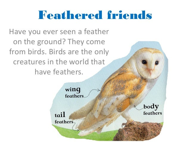 Feathered friends Have you ever seen a feather on the ground? They come from birds. Birds are the only creatures in the wo...