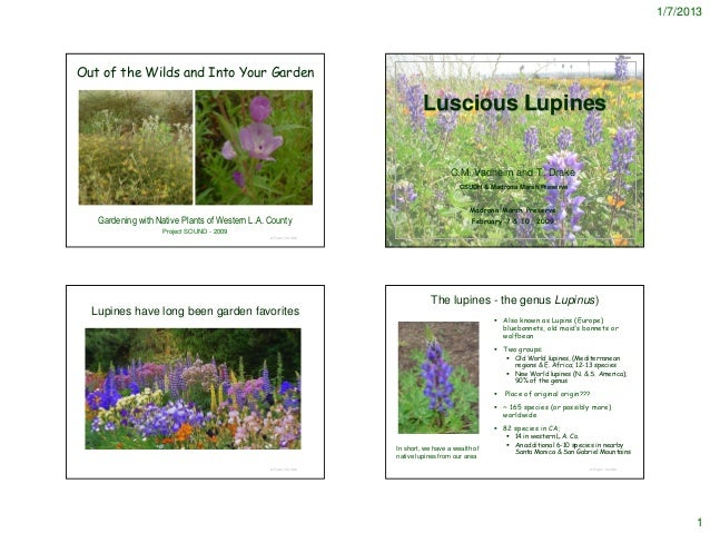 1/7/2013Out of the Wilds and Into Your Garden                                                                           Lu...