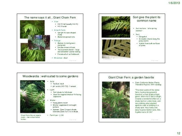 names of ferns. names of ferns