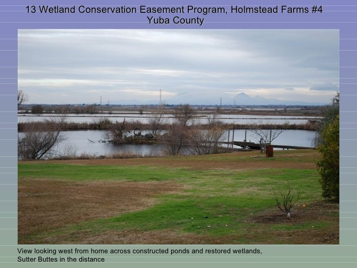 13 Wetland Conservation Easement Program, Holmstead Farms #4  Yuba County View looking west from home across constructed p...