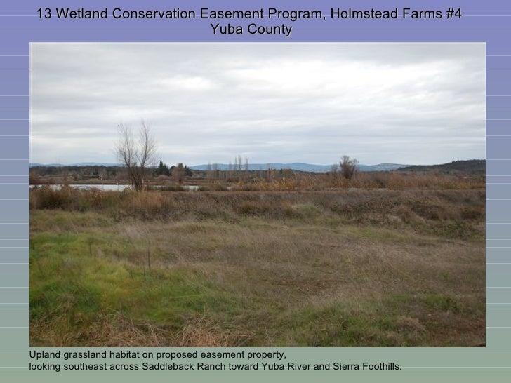 13 Wetland Conservation Easement Program, Holmstead Farms #4  Yuba County Upland grassland habitat on proposed easement pr...