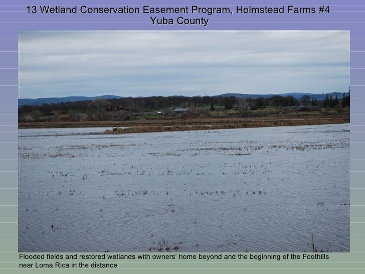 13 Wetland Conservation Easement Program, Holmstead Farms #4  Yuba County Flooded fields and restored wetlands with owners...