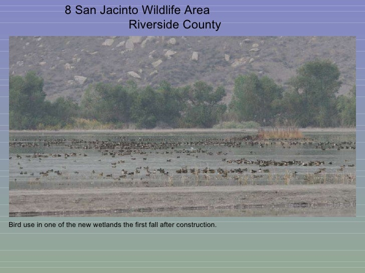 8 San Jacinto Wildlife Area  Riverside County Bird use in one of the new wetlands the first fall after construction.