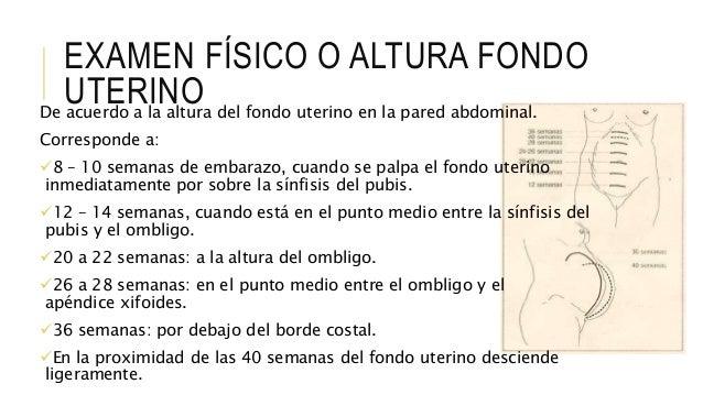EXAMEN FÍSICO O ALTURA FONDO UTERINODe acuerdo a la altura del fondo uterino en la pared abdominal. Corresponde a: 8 – 10...