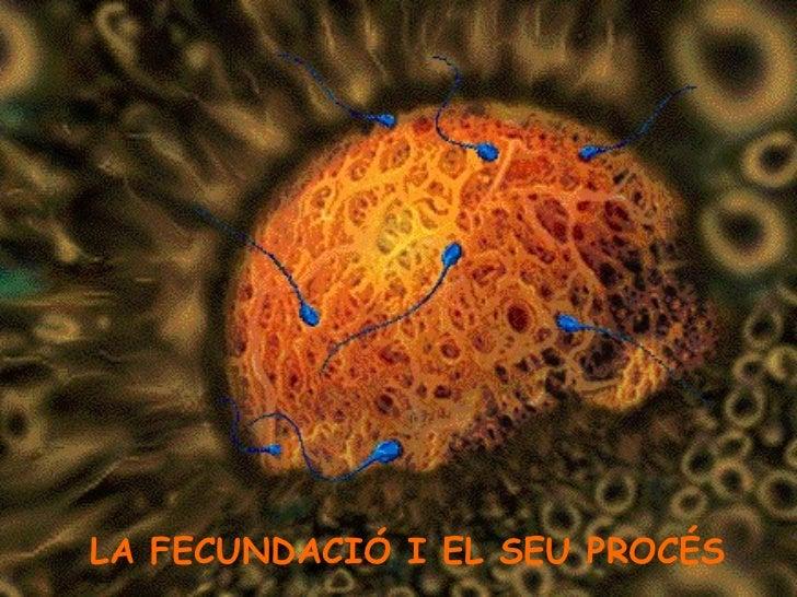 LA FECUNDACIÓ I EL SEU PROCÉS