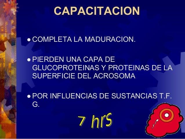 3. La cabeza del espermatozoide crece y formapronúcleo masculino4. La cola del espermatozoide se desprende ydegenera.5. El...
