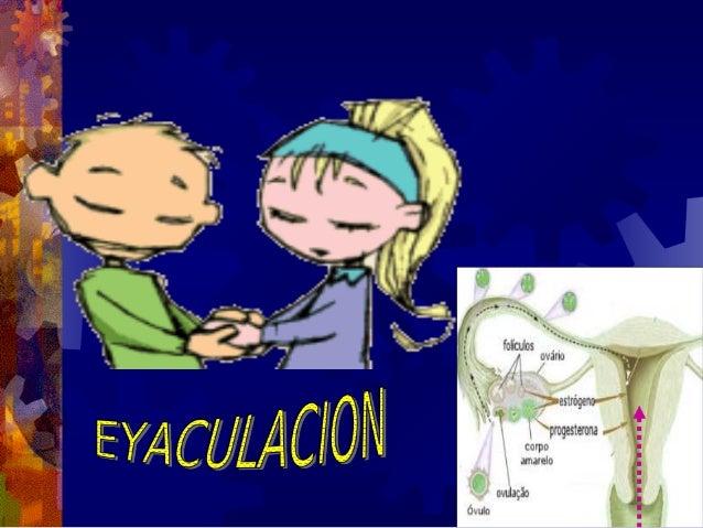 REACCION ACROSOMICA PERFORACIONES EN EL ACROSOMA, A TRAVES DE LAS CUALES    SALEN LAS ENZIMAS (HIALURONIDASA Y ENZIMAS DE ...