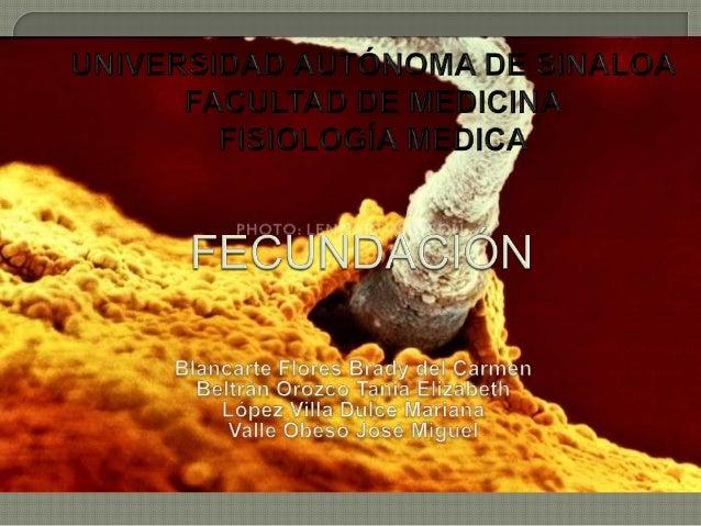 El sitio es laampolla de latrompa uterina ensu porción maslarga y ancha.*Dura alrededor de24 hrs & participanmoléculas deu...