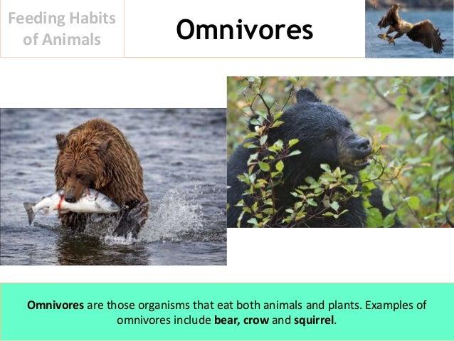 Feeding Habits Of Animals