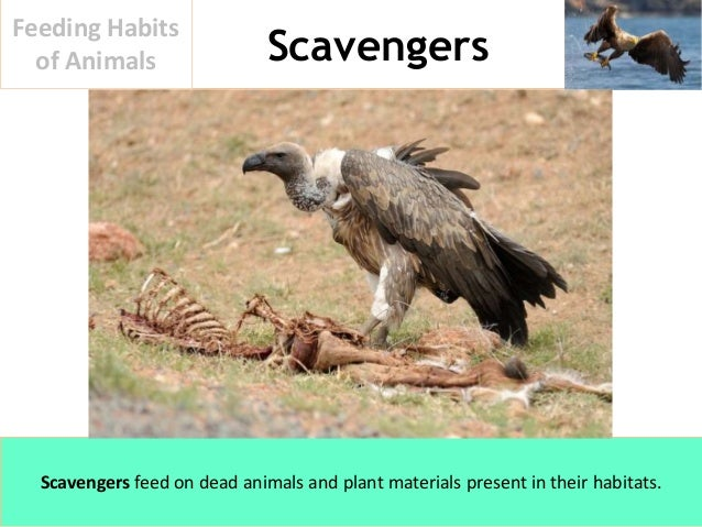 examples of scavengers animals