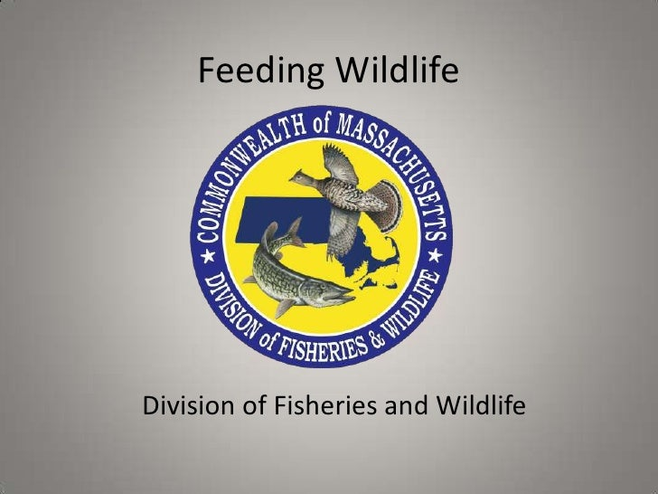 Feeding WildlifeDivision of Fisheries and Wildlife