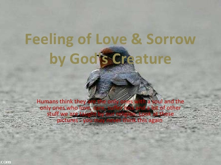 Feeling of Love & Sorrow by God's Creature<br />Humans think they are the only ones with a soul and the only ones who love...