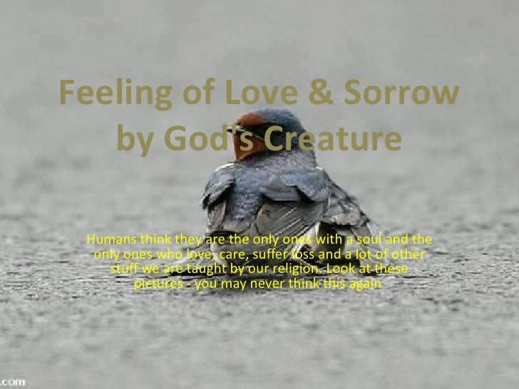 Feeling of Love & Sorrow    by God's Creature   Humans think they are the only ones with a soul and the   only ones who lo...