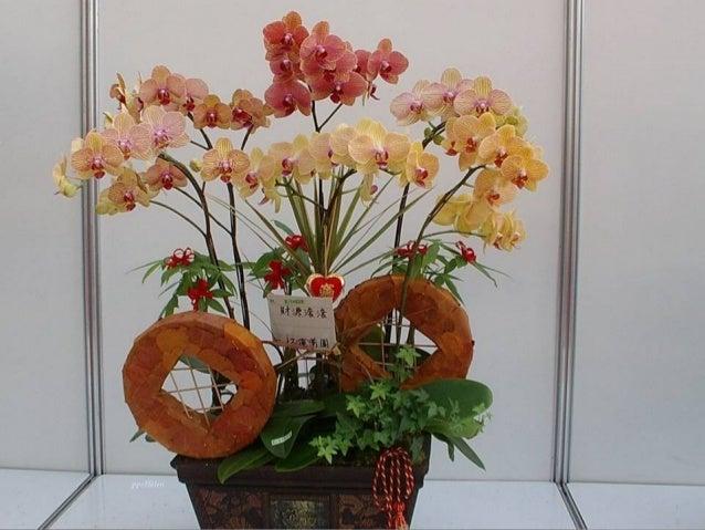 Feerie d-orchidees-helen Slide 2