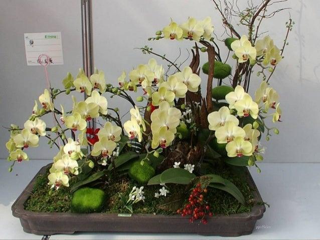 Feerie d-orchidees-helen Slide 3