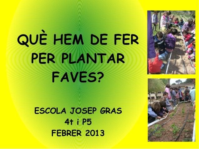 QUÈ HEM DE FER PER PLANTAR    FAVES? ESCOLA JOSEP GRAS       4t i P5    FEBRER 2013
