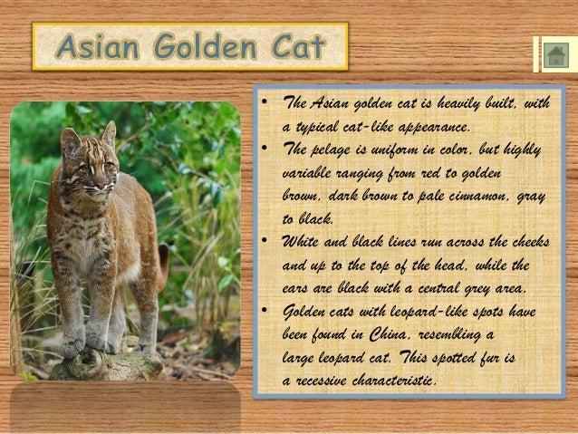 Felidae: The Cat Family