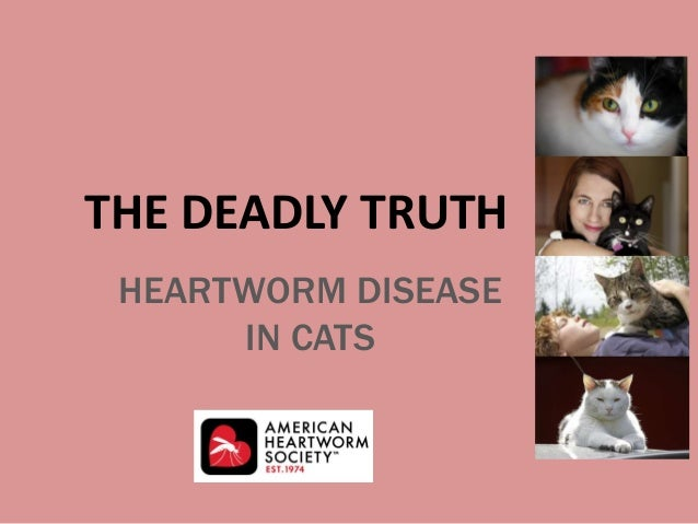HEARTWORM DISEASE IN CATS THE DEADLY TRUTH