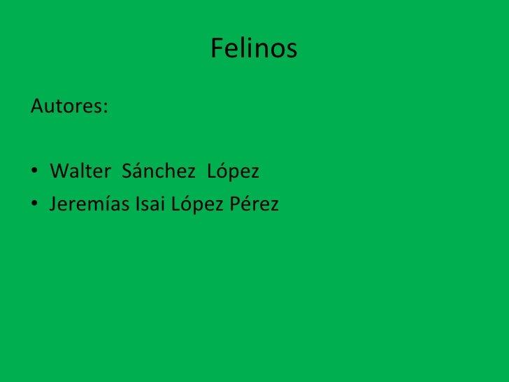Felinos<br />Autores:<br />Walter  Sánchez  López <br />Jeremías Isai López Pérez      <br />