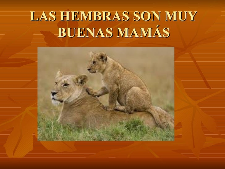 LAS HEMBRAS SON MUY BUENAS MAMÁS