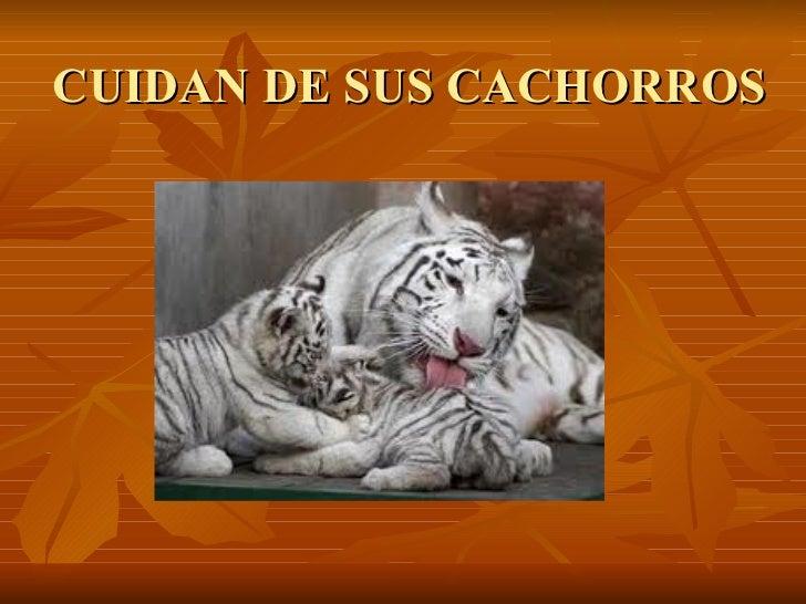 CUIDAN DE SUS CACHORROS