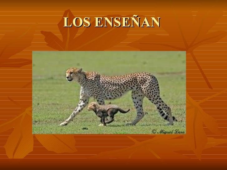 LOS ENSEÑAN