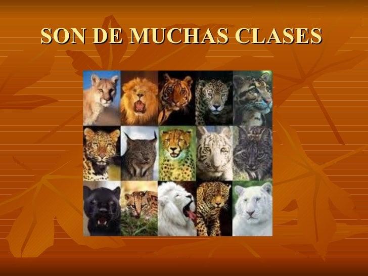 SON DE MUCHAS CLASES