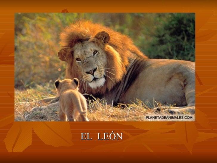 <ul><li>EL  LEÓN </li></ul>