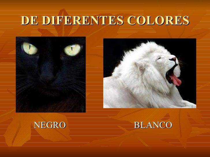 DE DIFERENTES COLORES <ul><li>NEGRO  BLANCO </li></ul>