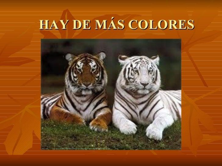 HAY DE MÁS COLORES