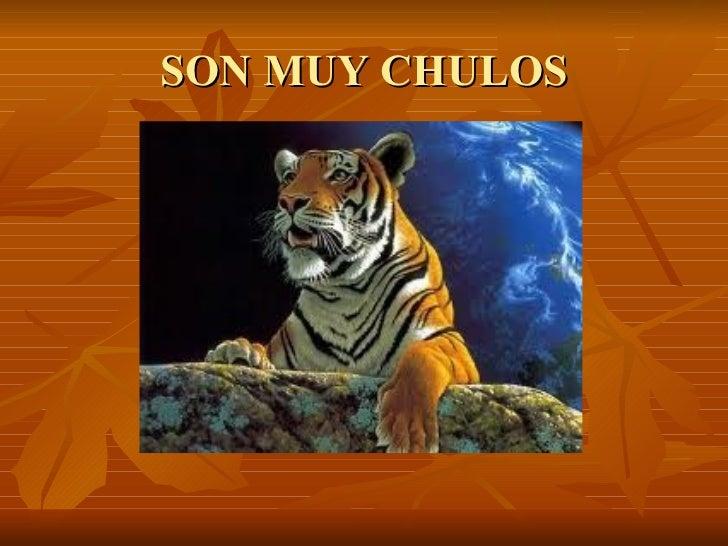 SON MUY CHULOS