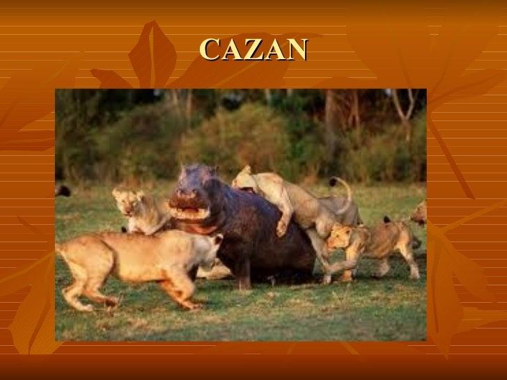 CAZAN