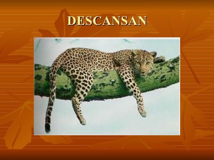 DESCANSAN