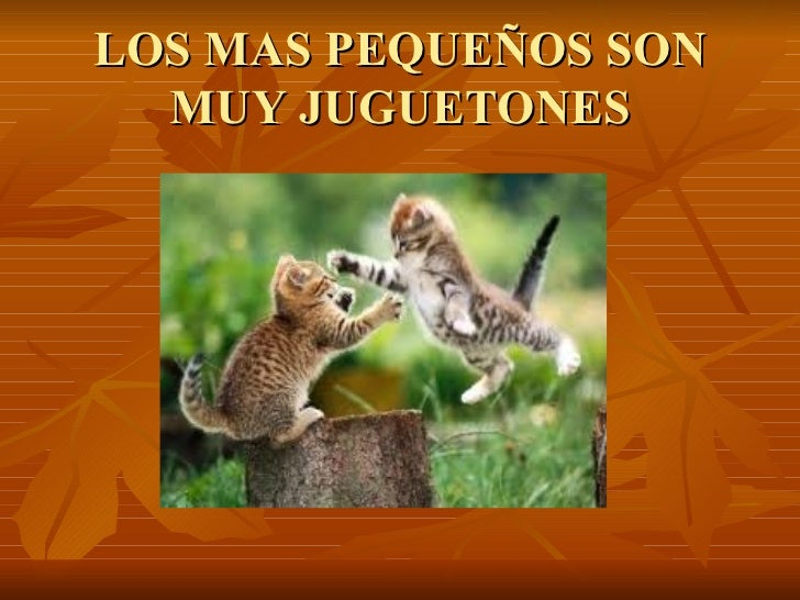 LOS MAS PEQUEÑOS SON MUY JUGUETONES