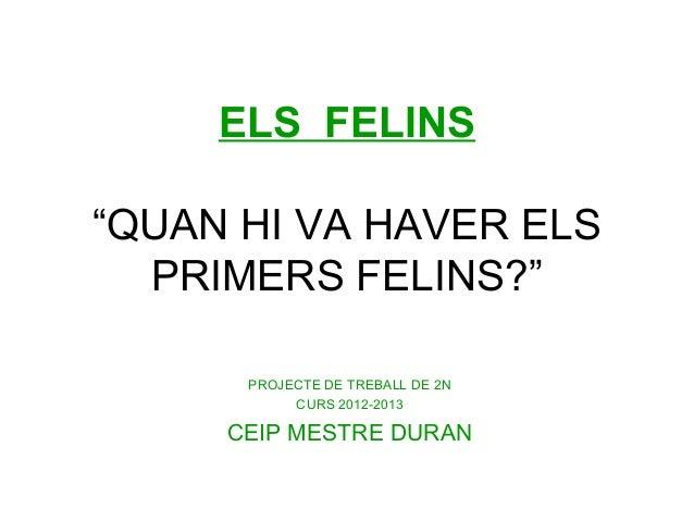 """ELS FELINS""""QUAN HI VA HAVER ELSPRIMERS FELINS?""""PROJECTE DE TREBALL DE 2NCURS 2012-2013CEIP MESTRE DURAN"""