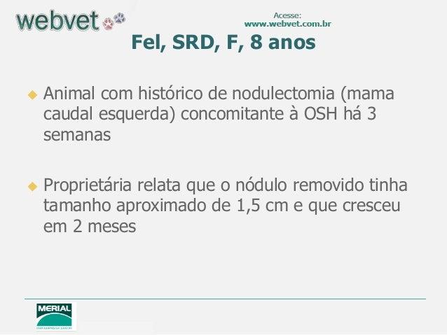 Fel, SRD, F, 8 anos Animal com histórico de nodulectomia (mamacaudal esquerda) concomitante à OSH há 3semanas Proprietár...