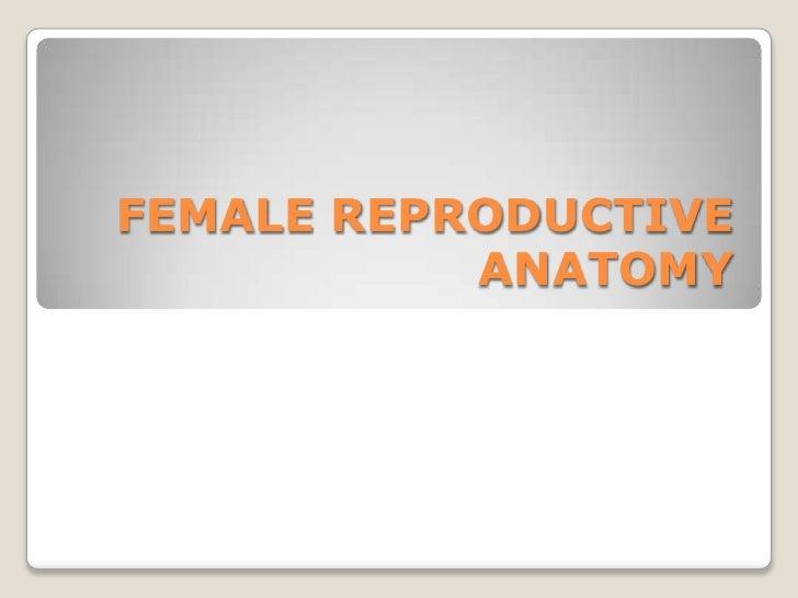 FEMALE REPRODUCTIVE ANATOMY<br />