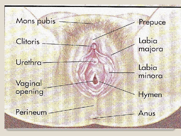 Reproductive Systemfemale