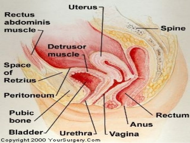 Female Genital Tract Anatomy