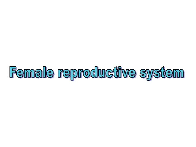It is consists of • two ovaries, • two uterine tube, • the uterus, • the vagina and • the external genitalia. • Mammary gl...