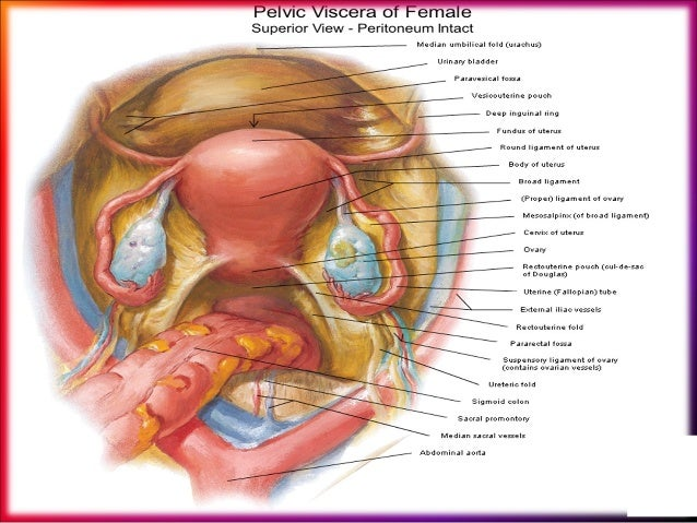Female Pelvic Applied Anatomy By Dr Shashwat Jani