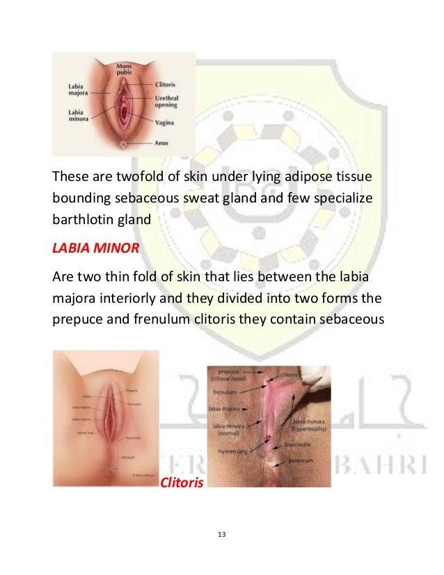 Clitoris stretching labia mutilation circumcision fgm