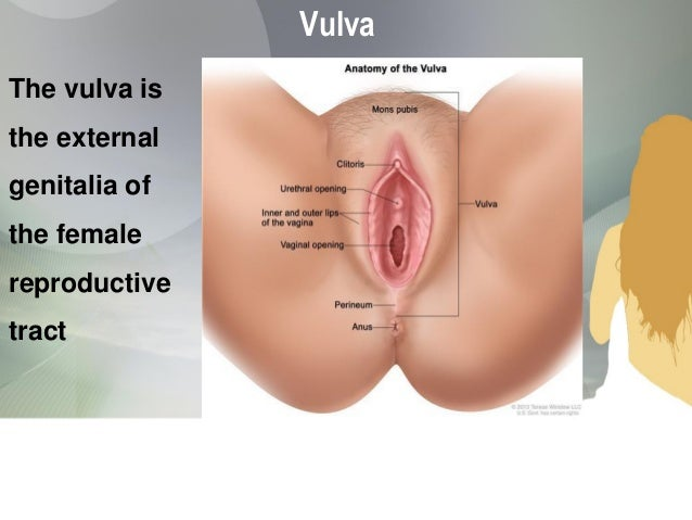 Female Genital Tract Malignancies