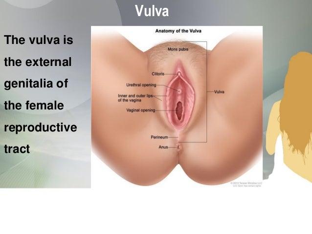 Women'S Sexual Organs 106