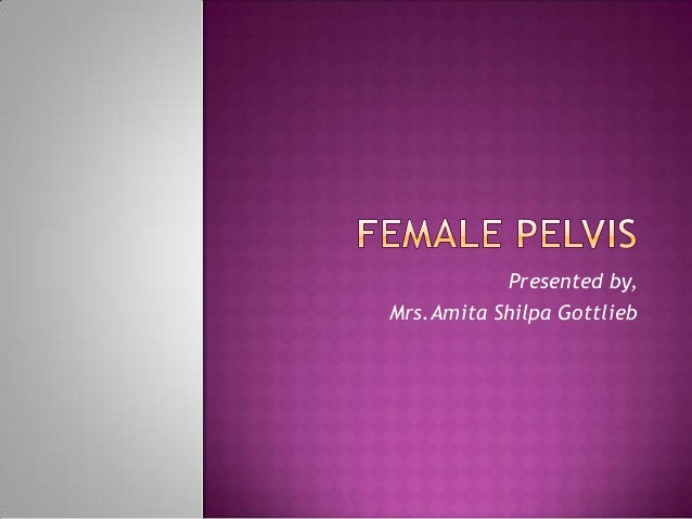 Female Pelvis Ppt